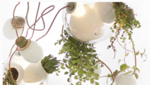 Illuminate your room with greenery